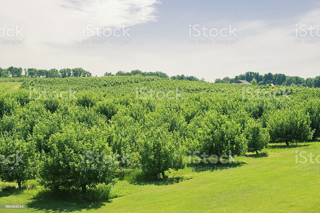 Summer Orchard stock photo