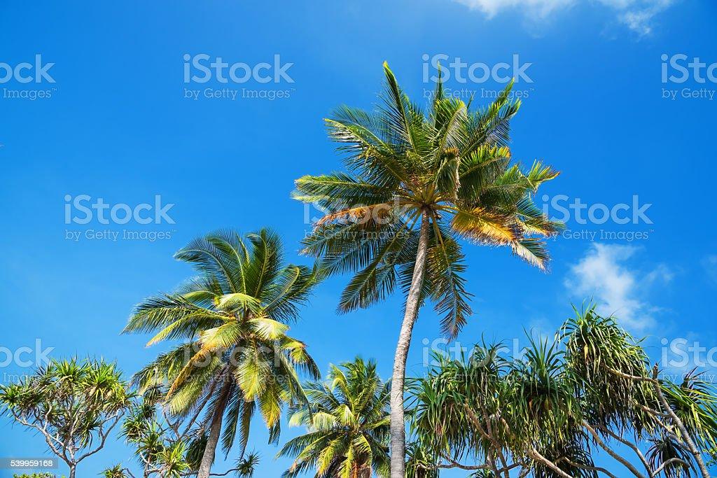 Summer palm trees stock photo