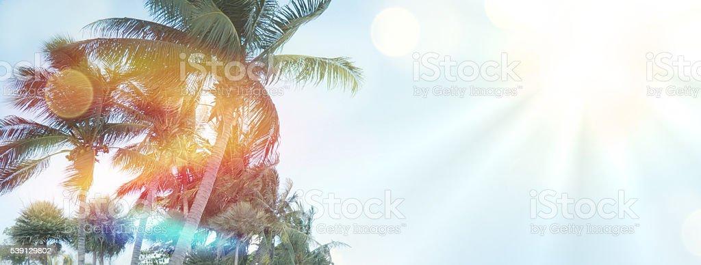 summer palms background sunshine feelings photo graphic stock photo
