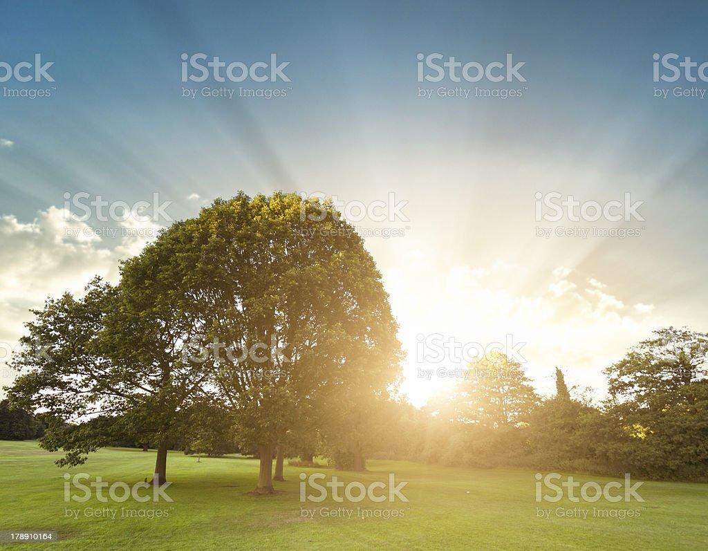 Summer park on derbyshire royalty-free stock photo