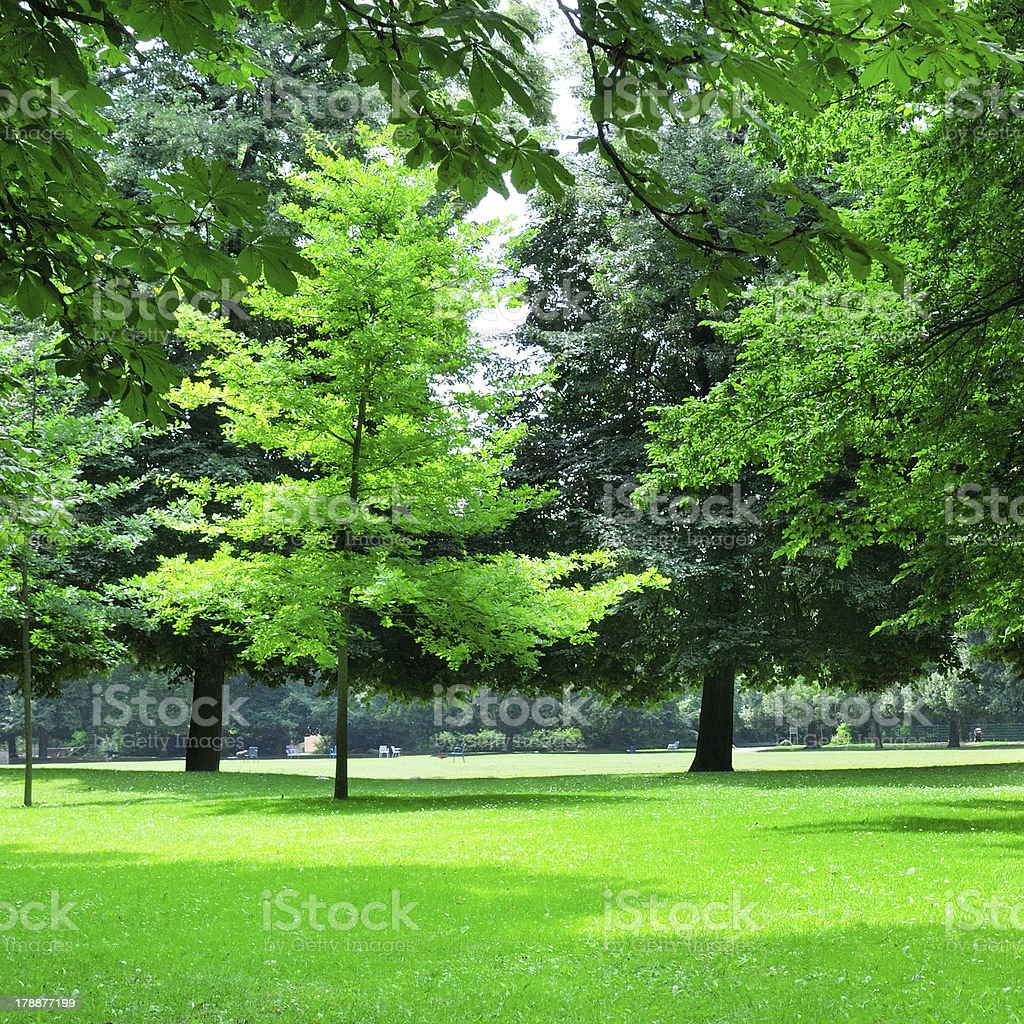 summer park royalty-free stock photo