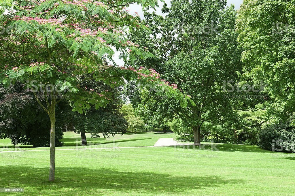 summer park royalty-free stock photo
