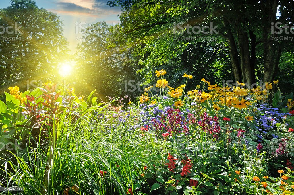 summer park with a flower bed stock photo