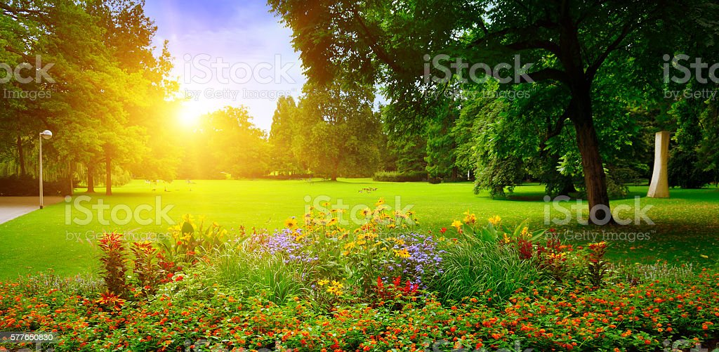 summer park with beautiful flowerbeds stock photo