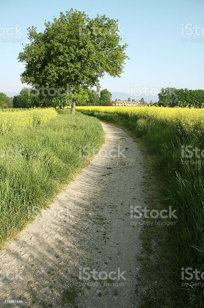 summer path royalty-free stock photo