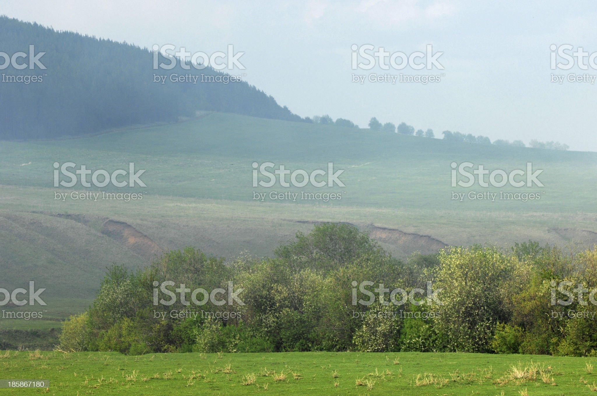 summer. royalty-free stock photo