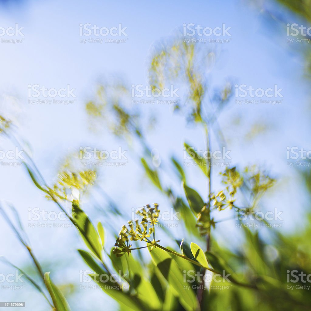 Summer plant royalty-free stock photo