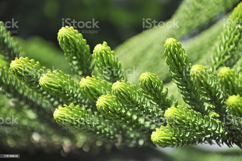 Summer plants royalty-free stock photo