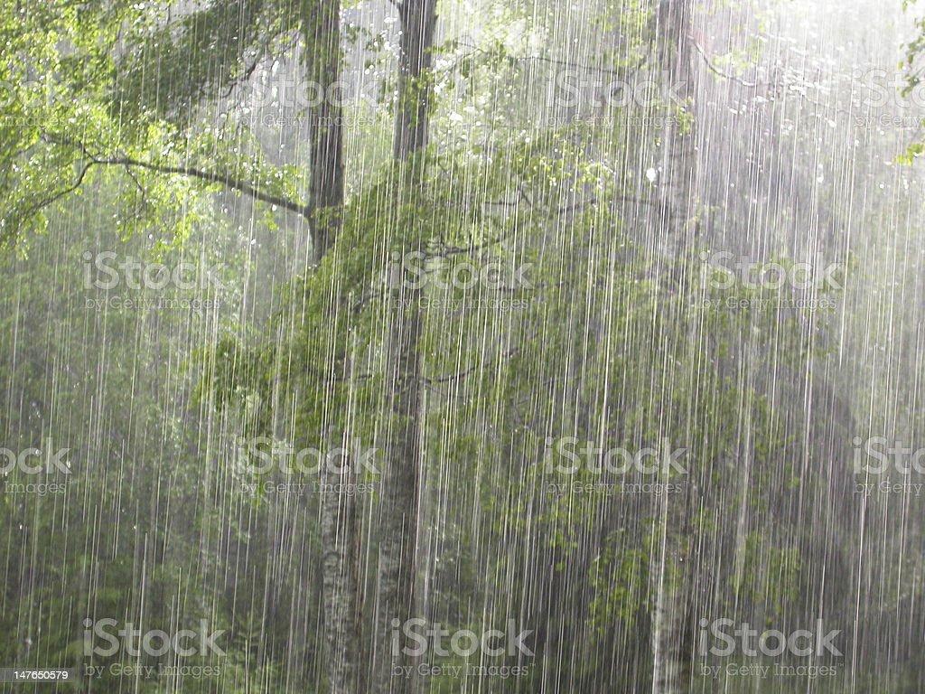 Summer rain stock photo