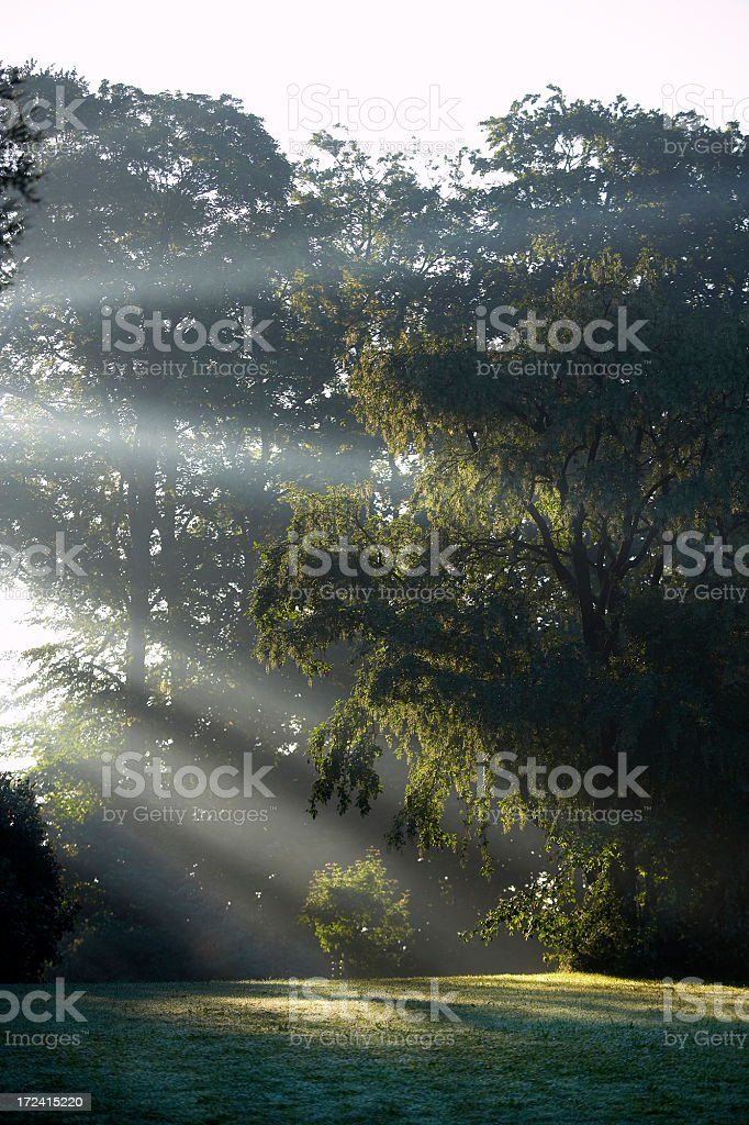 Summer Rays in Forest..... stock photo