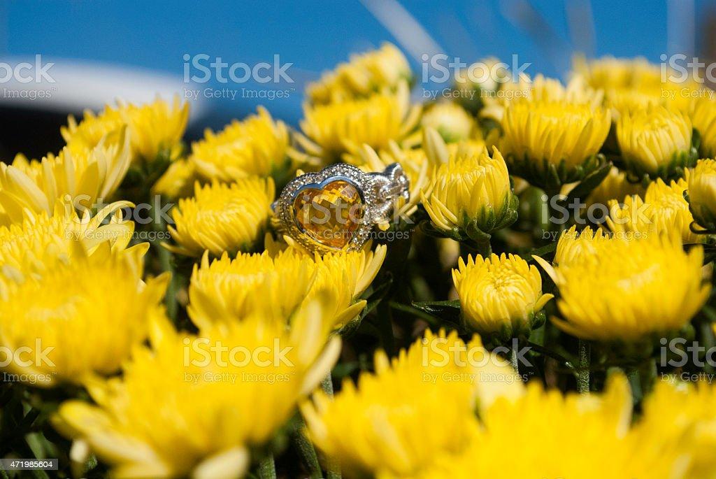 Summer Rings stock photo