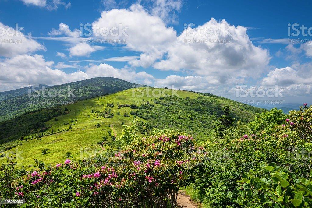 Summer Roan Mountain Bloom stock photo