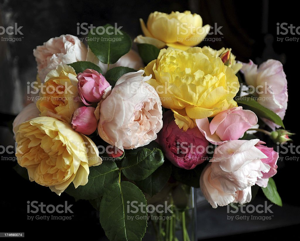 Summer roses stock photo