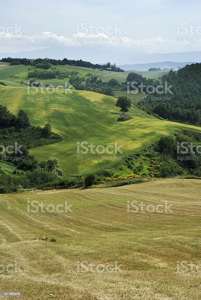 Summer rural landscape royalty-free stock photo