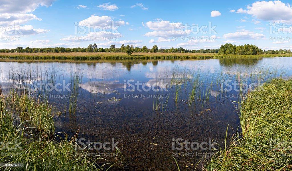 Summer rushy lake panorama royalty-free stock photo