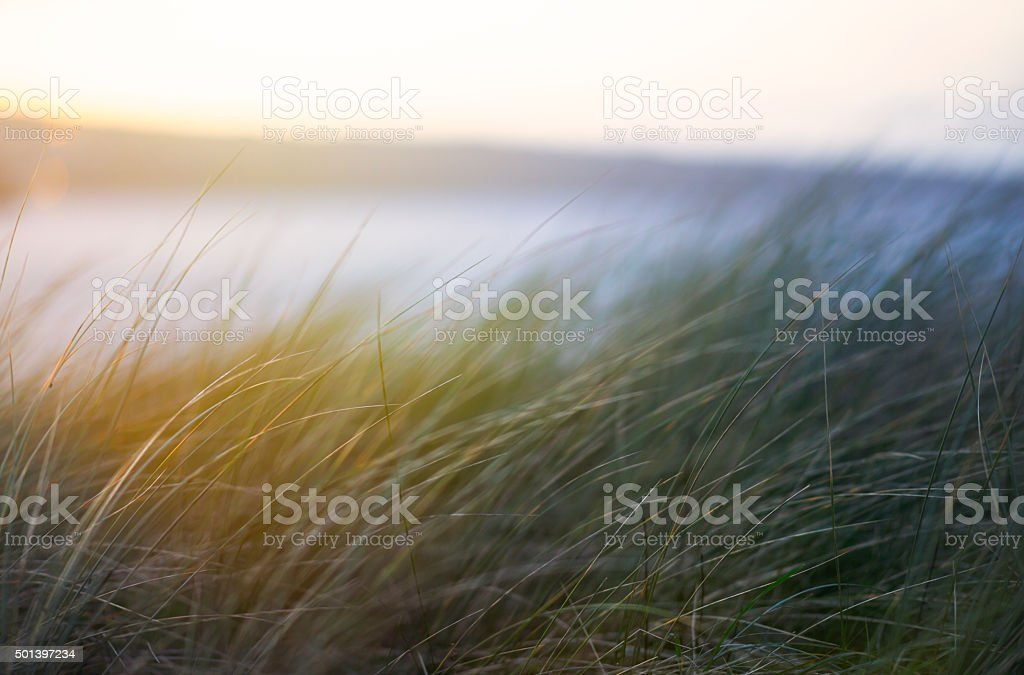 Summer sand dune grasses in cornwall stock photo