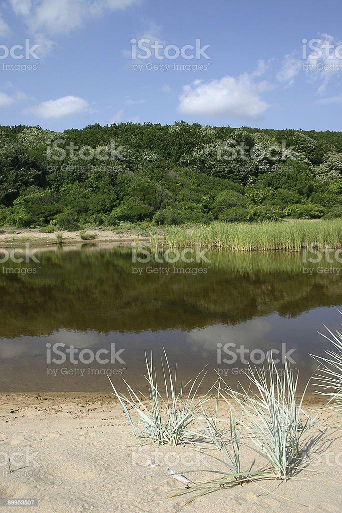 Summer scene royalty-free stock photo
