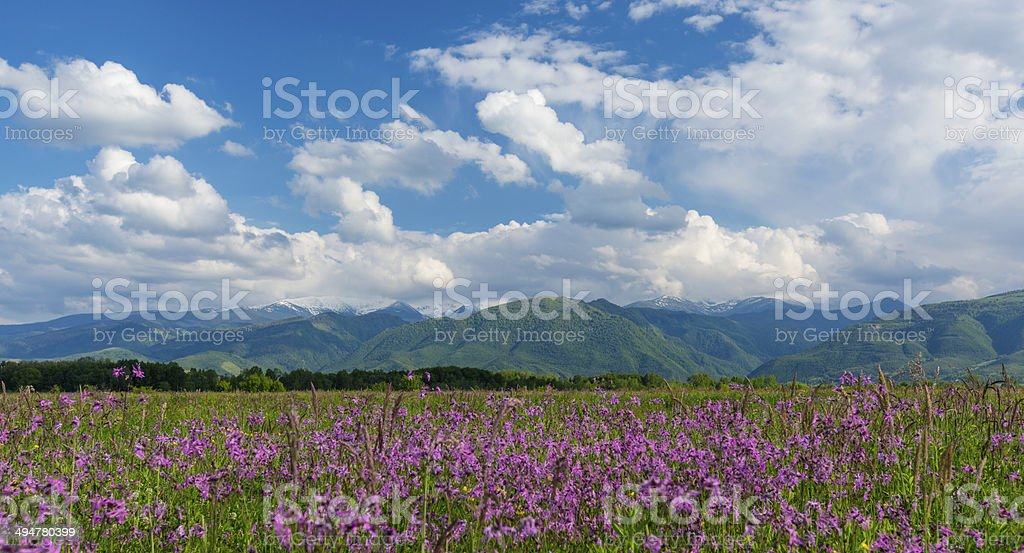 Summer scenery in the Alps royalty-free stock photo