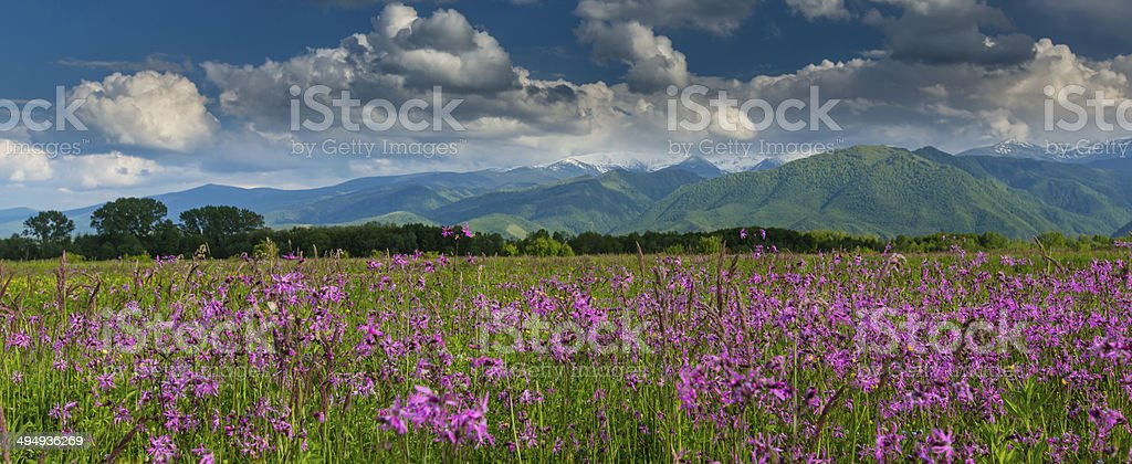 Summer scenery in the Alps stock photo