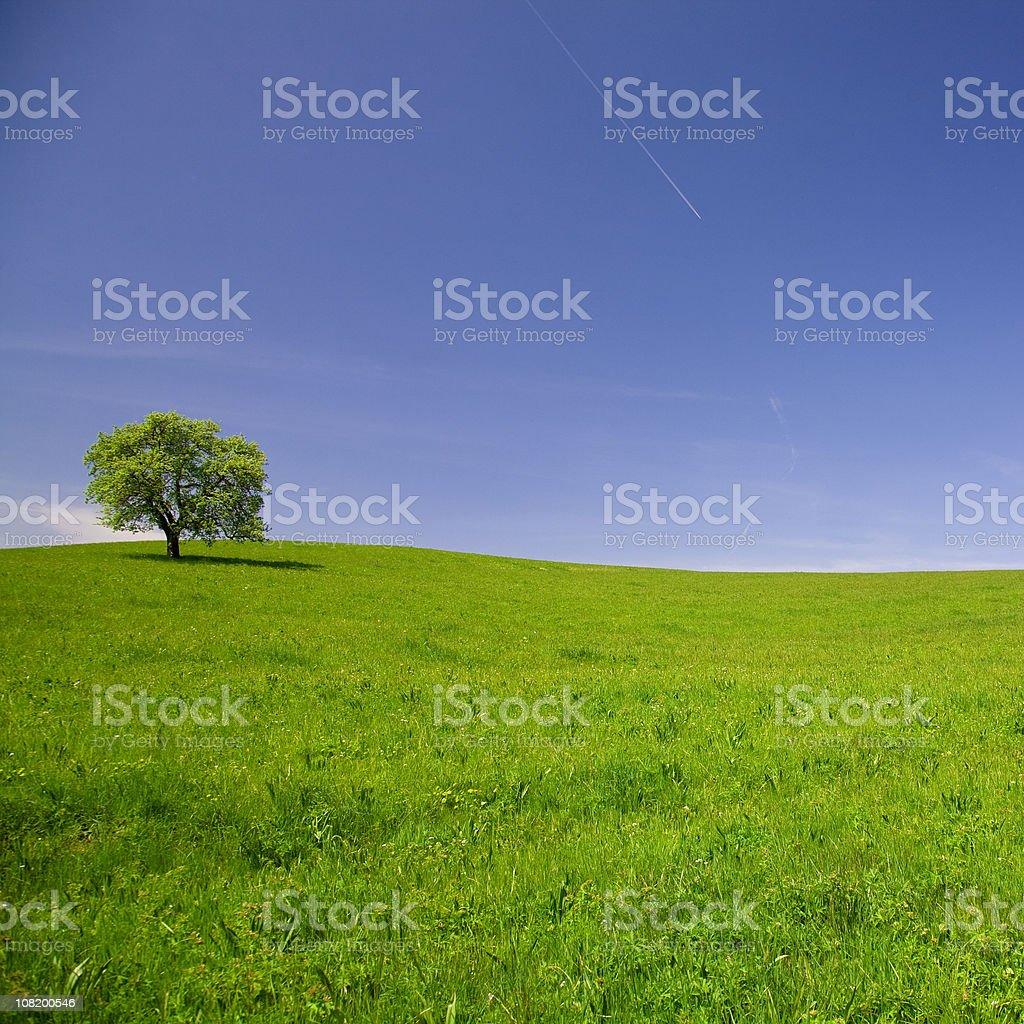 summer scenic royalty-free stock photo