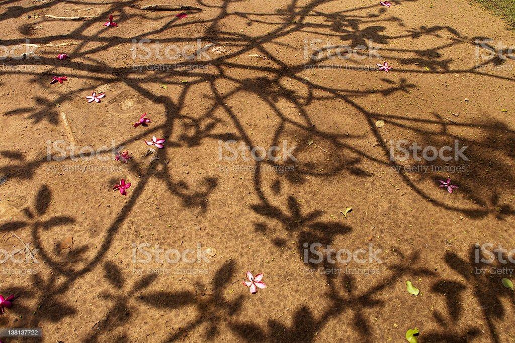 Lato Shade. Cieniu drzewa na lądzie zbiór zdjęć royalty-free