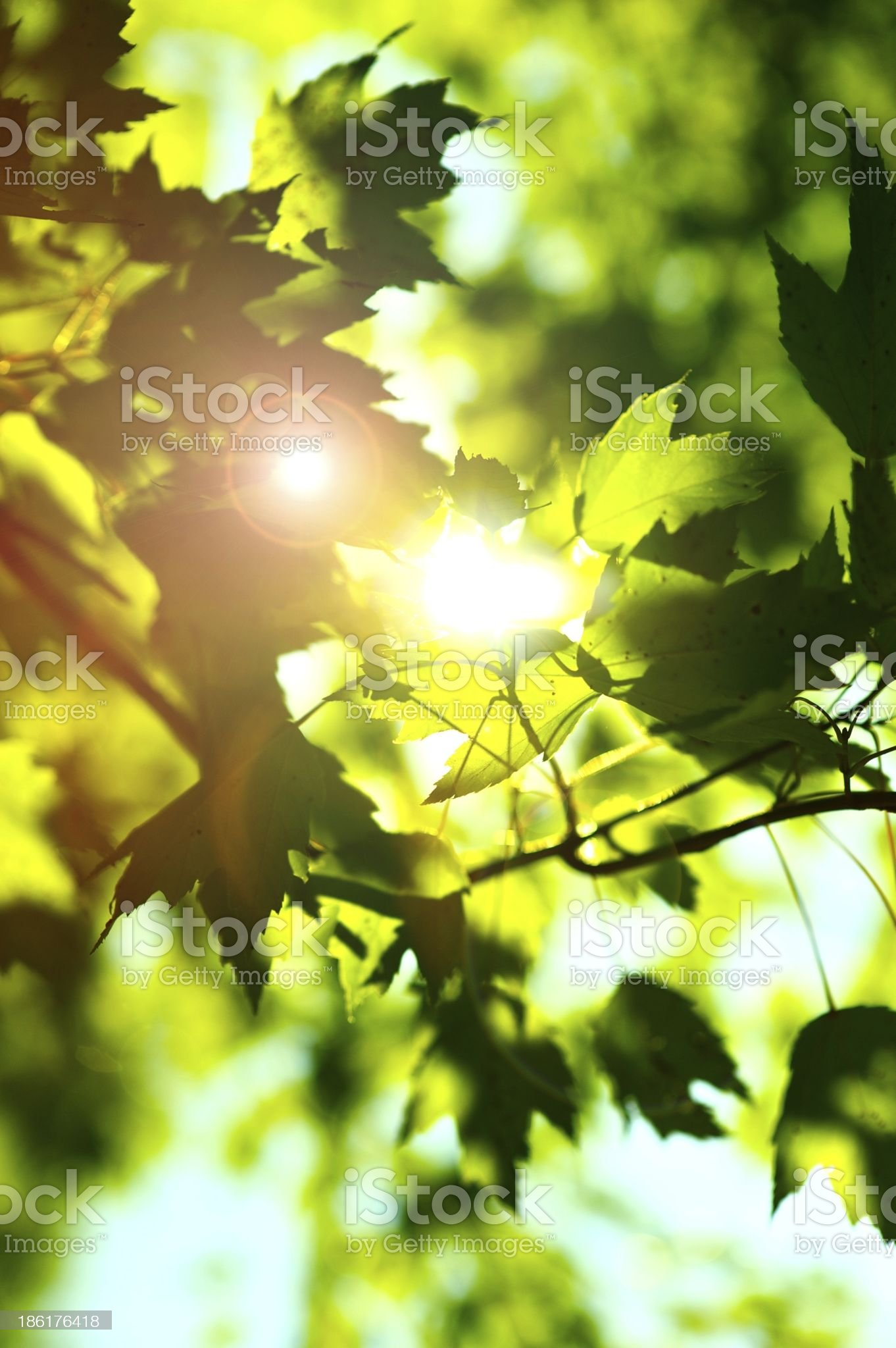 Summer Shine royalty-free stock photo