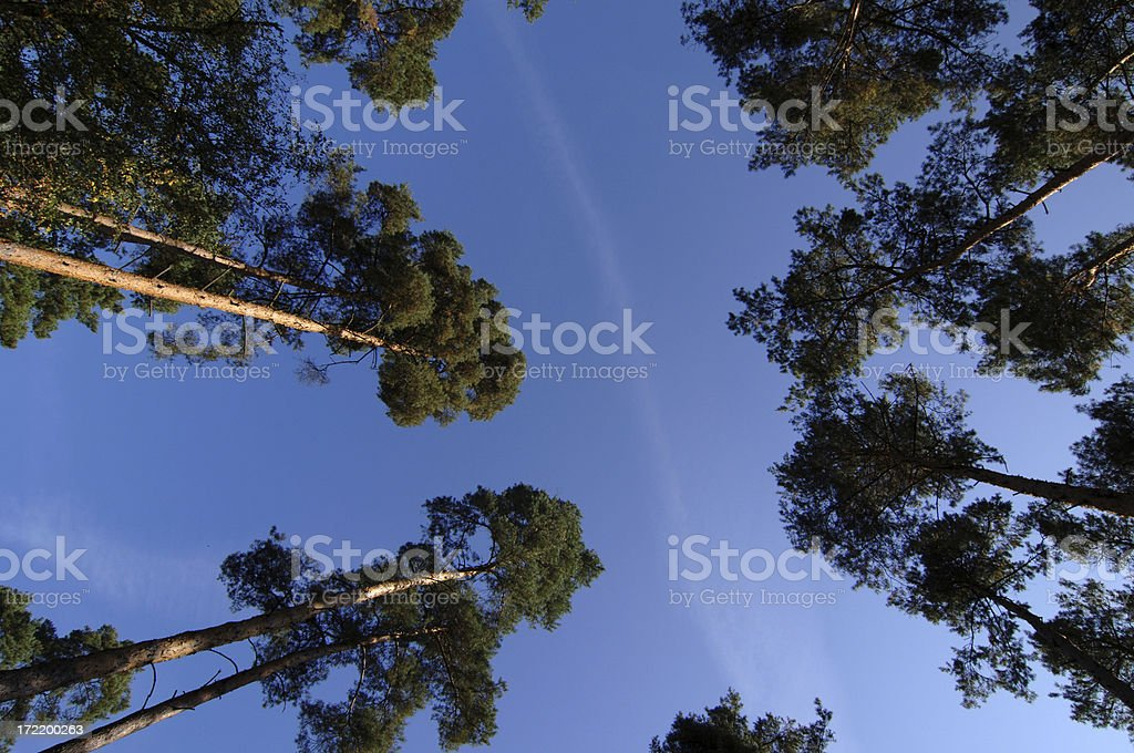 Summer sky and trees in a forest royalty-free stock photo