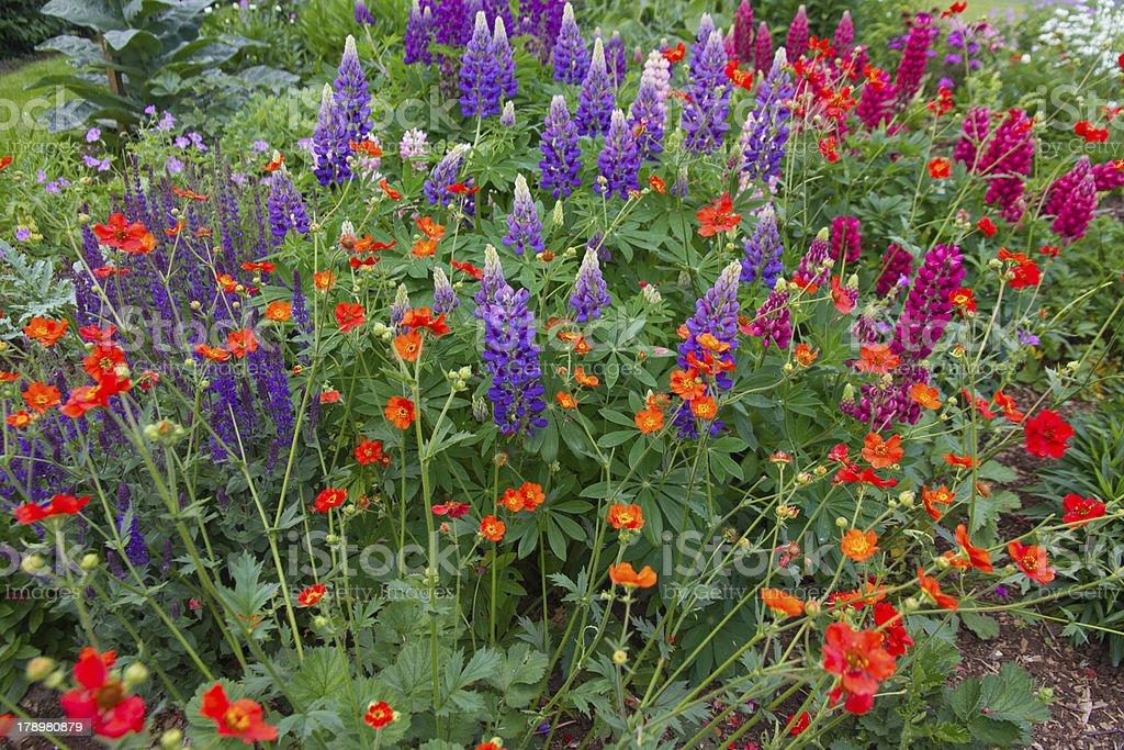 Summer splendor royalty-free stock photo