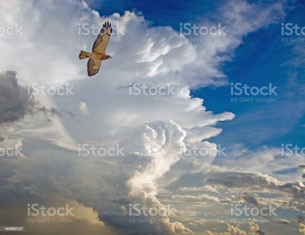 Summer Storm Clouds and Hawk stock photo