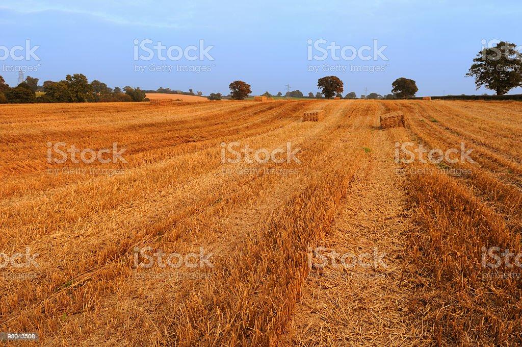 Summer Straw Field royalty-free stock photo