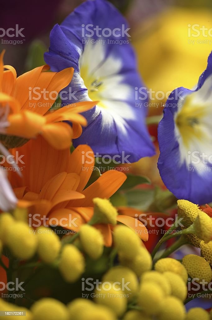 Summer sumptuous royalty-free stock photo