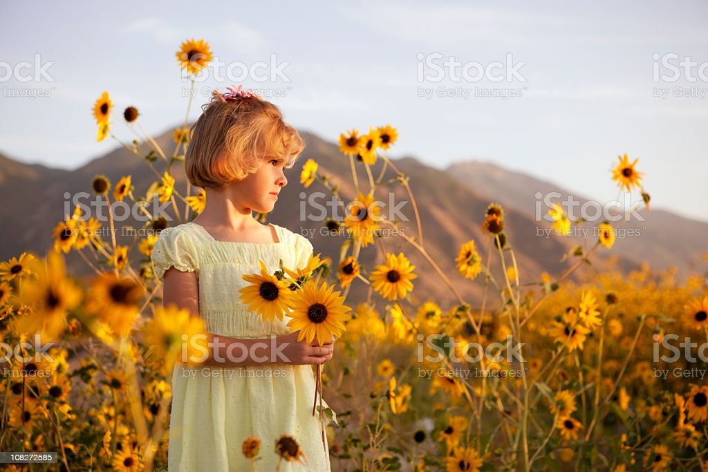 Summer Sunflowers stock photo