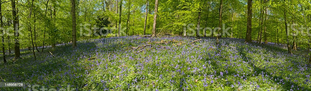 Summer sunlight idyllic wildflower forest royalty-free stock photo