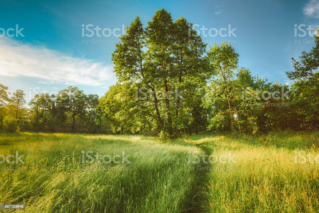 Summer Sunny Forest Trees And Green Grass. Nature Wood Sunlight stock photo