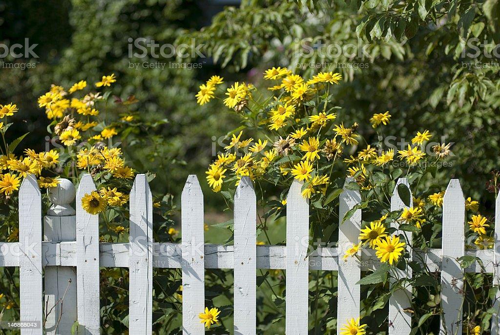 Summer Sunny Suburban Scene stock photo