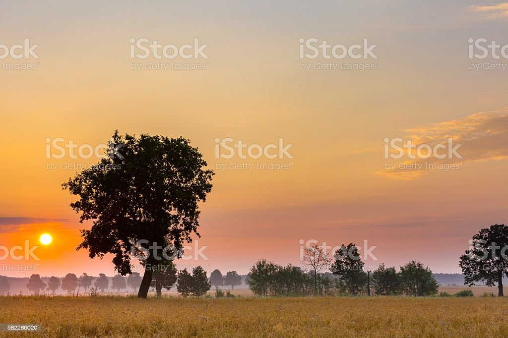 Summer sunrise over fields and trees silhouettes stock photo