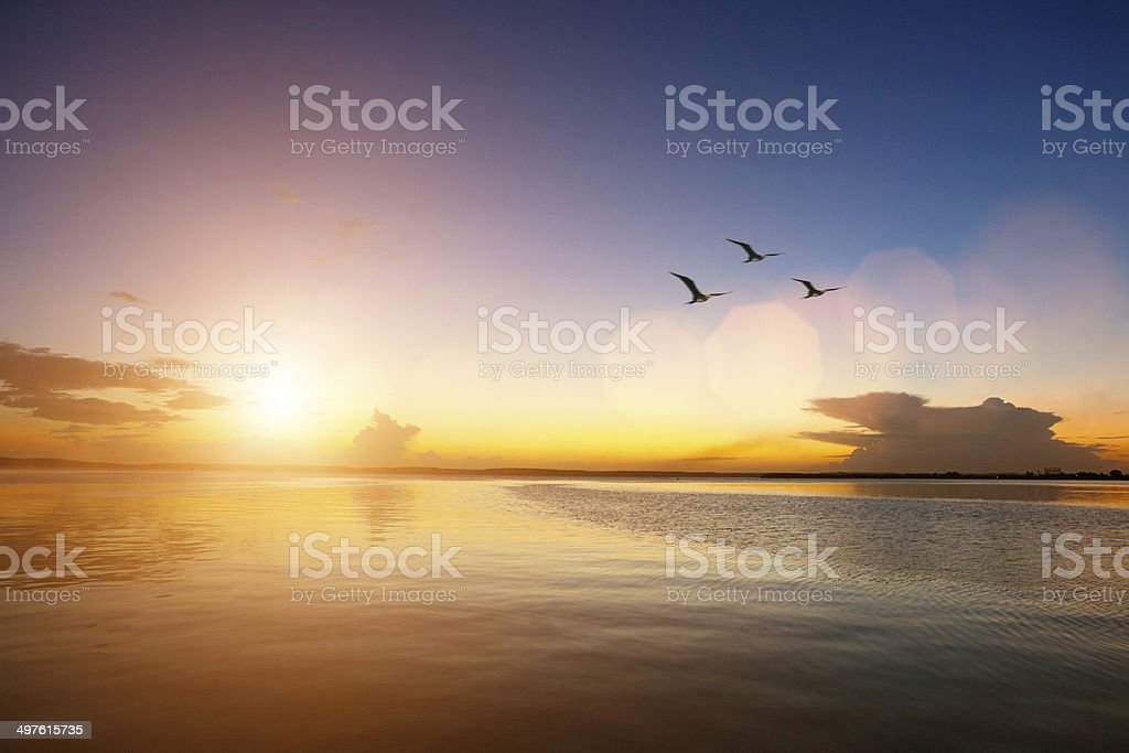 Summer sunset, idyllic seascape, birds flying away stock photo