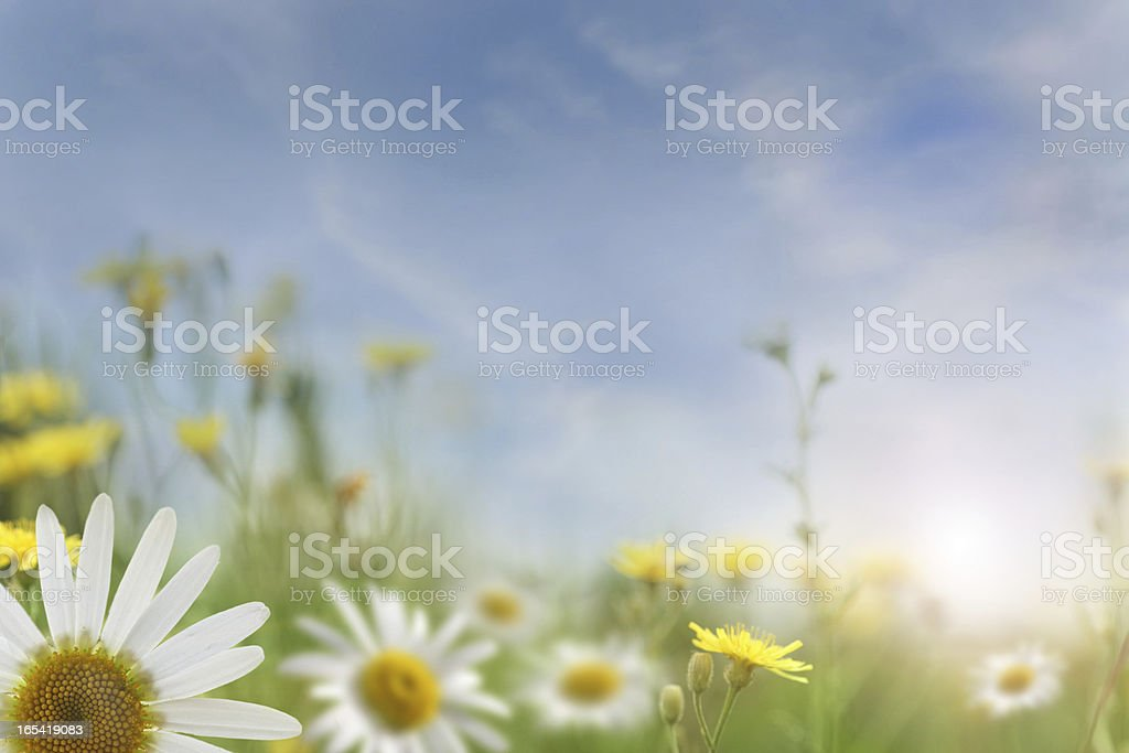 Summer Sunset In The Field royalty-free stock photo