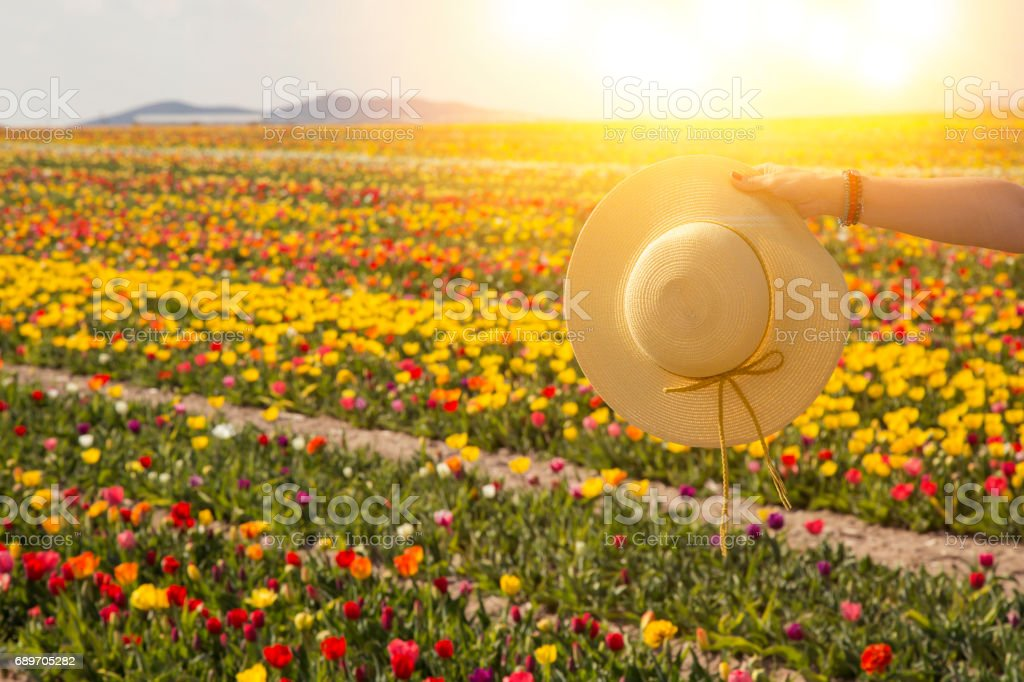 summer sunshine woman hand holding hat. Woman is holding the hat on beautiful blue sky and flower garden background. stock photo