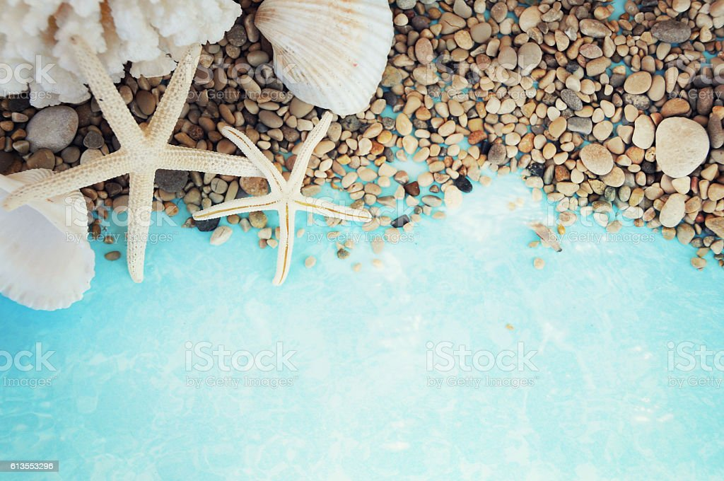 summer time with fish star and sea shells stock photo