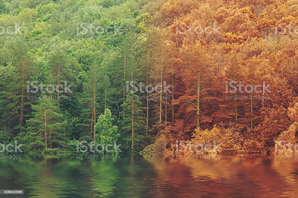 Summer to autumn fall forest reflected on lake stock photo