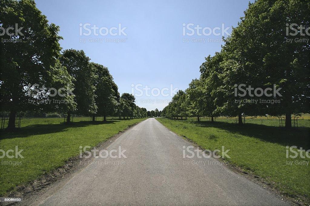 Summer tree lined avenue royalty-free stock photo