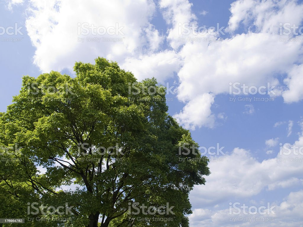 summer tree stock photo