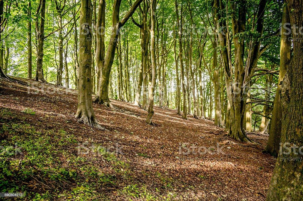 Summer Trees - Lancashire stock photo