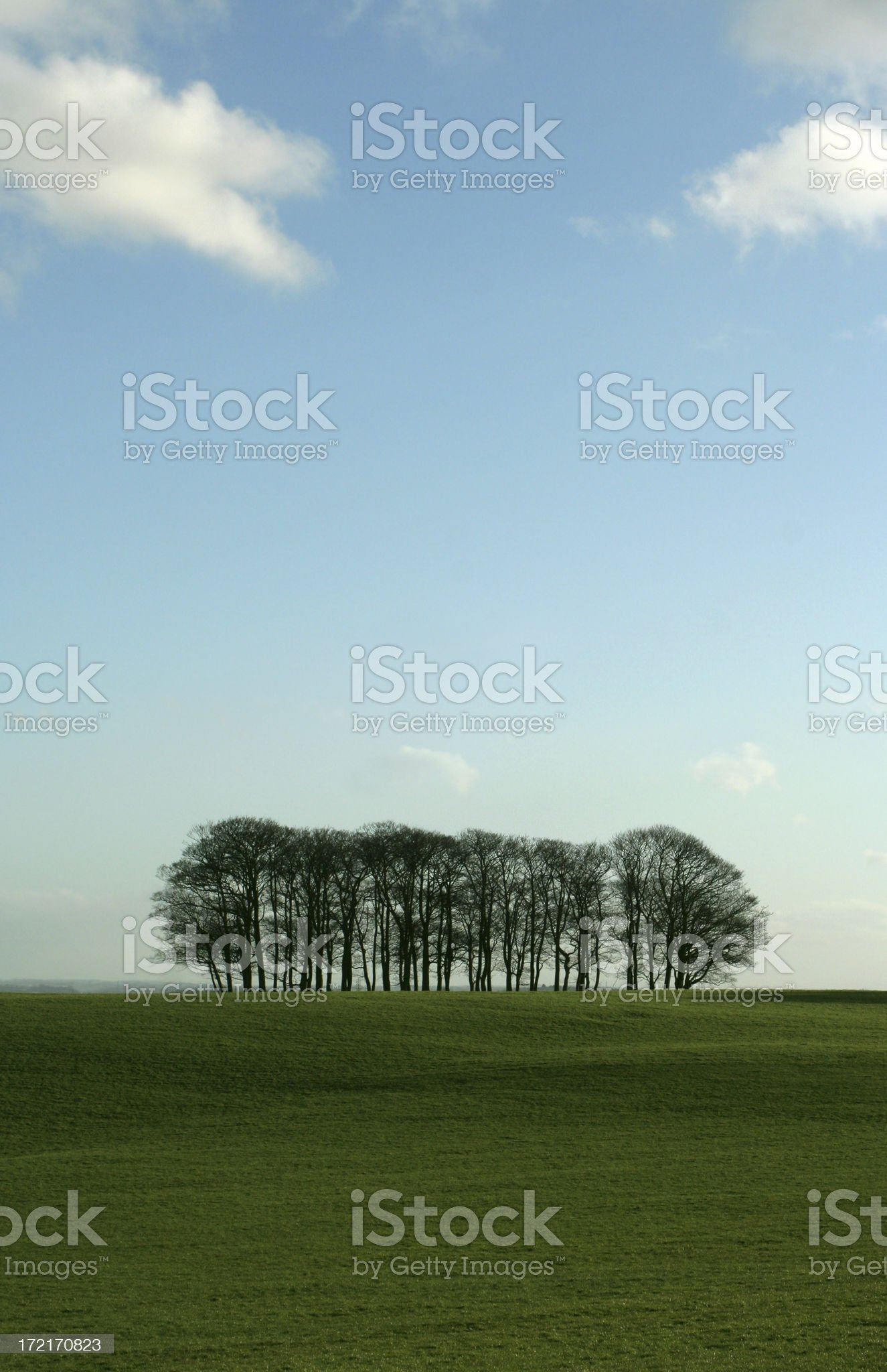 Summer trees royalty-free stock photo