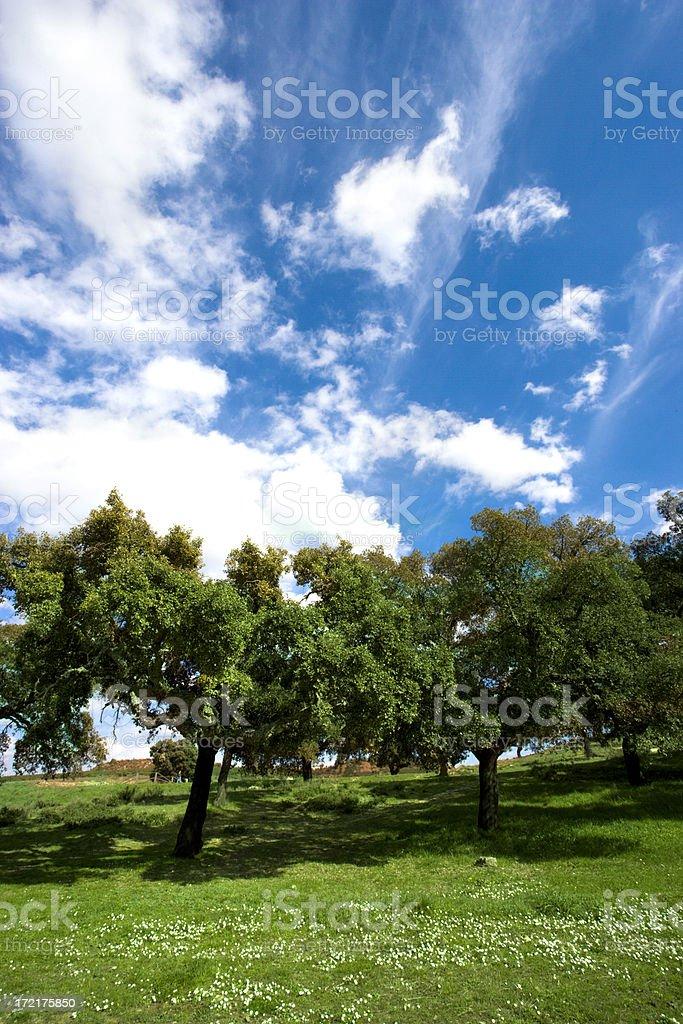Summer Trees royalty-free stock photo
