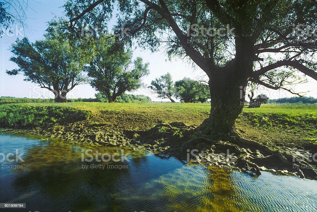 Summer, trees, river, Astrakhan region, Russia stock photo
