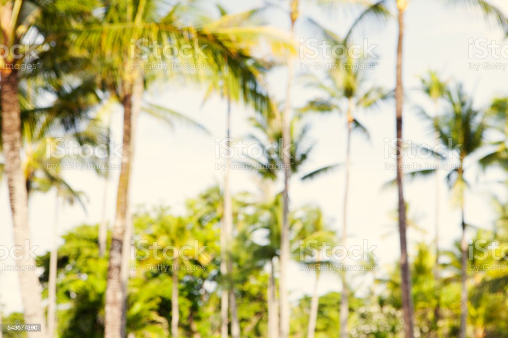 Summer tropical palm trees blurred background. Tonned stock photo