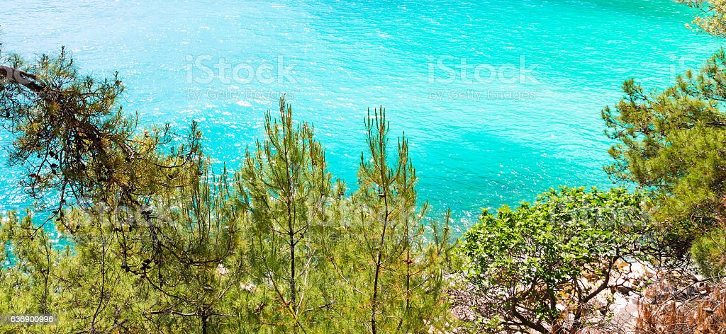 Summer vacation background with turquoise sea water bay and pine stock photo