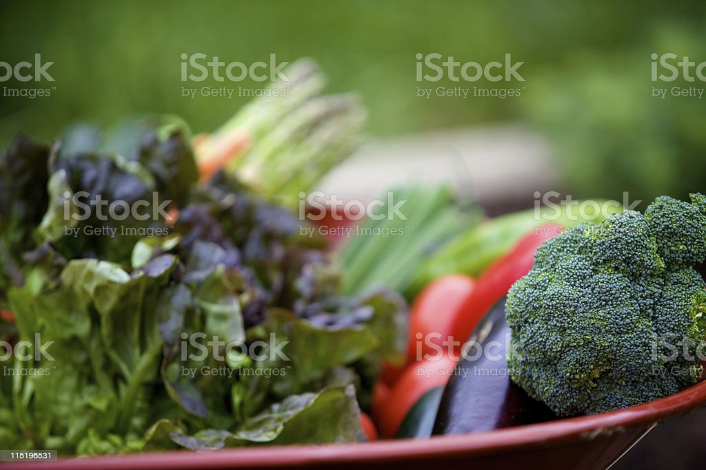summer vegetable gardening royalty-free stock photo